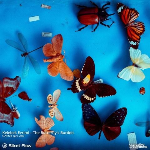 Kelebek Evrimi – The Butterfly's Burden