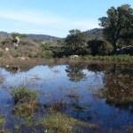 IAEDEN-Salvem l'Empordà i la UVic-UCC han recuperat dos estanys a l'Albera