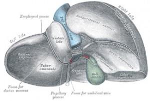 liver-fig-10871