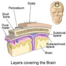 Layers of brain