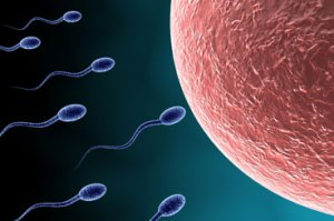 sperm_article