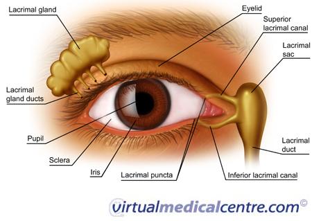 Eye Anatomyinteractive Health