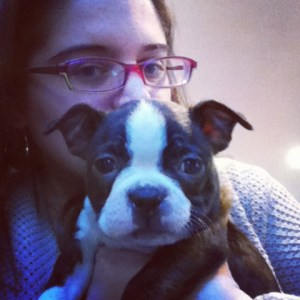 boston terrier puppies_01