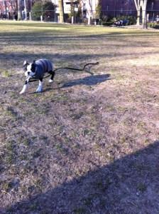 Kemper at Dog Park_02