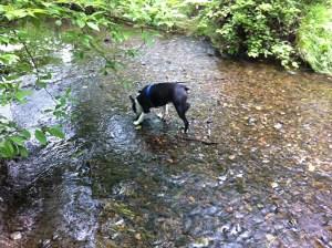 kemper in creek_02