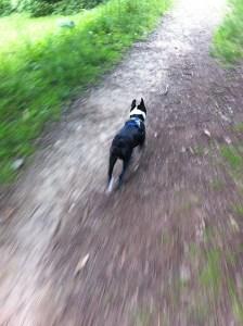 on a walk- arnold arboretum_02
