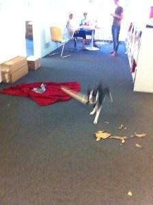 kemper running around the office