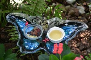Key West Butterfly Conservatory_17