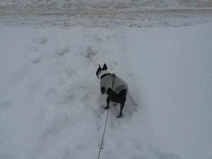 150211_snow long weekend-22
