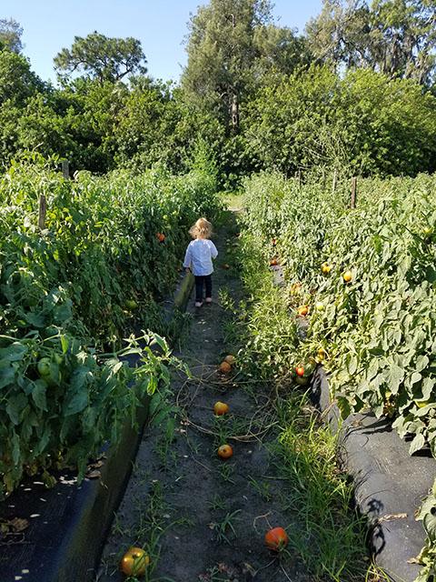 Tomato Picking_Apollo Beach_FL_09