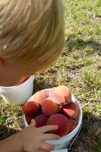 baby boy reaching towards a white bucket full of peaches