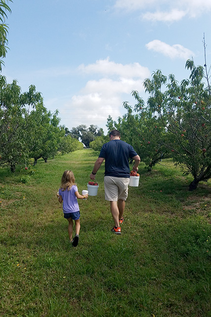 Father and daughter walking through peach tree rows