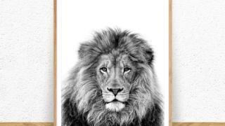 Black & White Lion Print- Digital Download