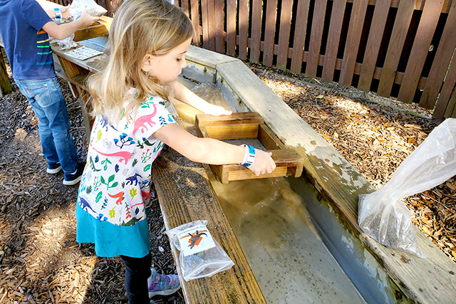 young girl sifts through dirt at Dinosaur World's Dino Gem Excavation exhibit