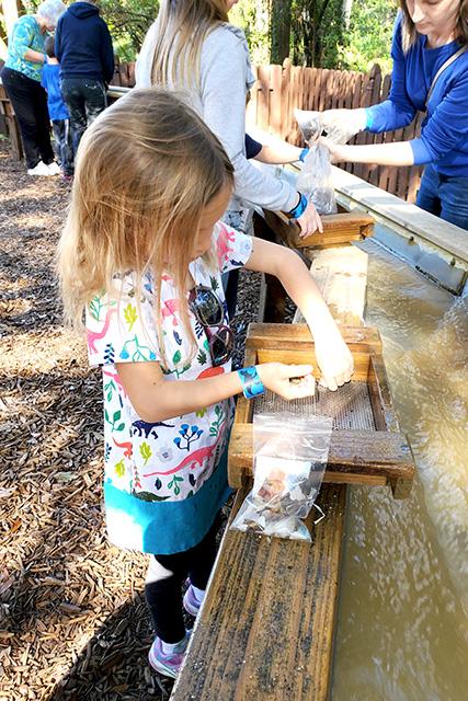 girl sifts through dirt at dinosaur world exhibit