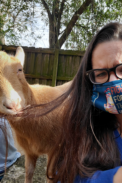Goat eating woman's hair when trying to take a selfie with goat