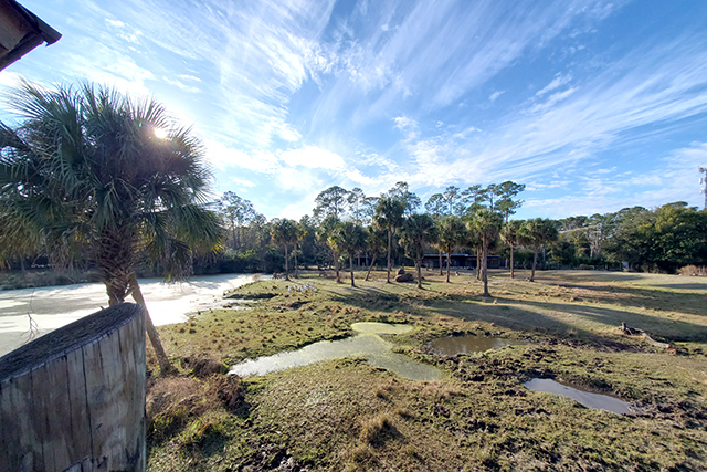panorama style picture of a open grassy area in an exhibit at the Jacksonville Zoo