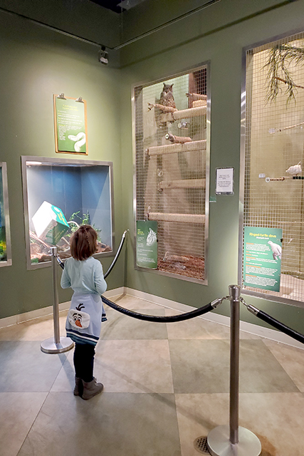 little girl standing in front of owl cages at Jacksonville Zoo