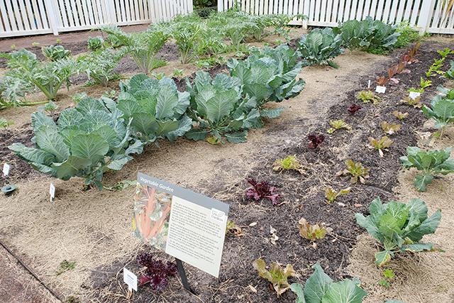 rows of vegetables in vegetable garden at Leu Garden