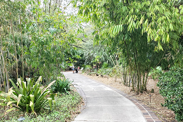 tree lined path at Leu Gardens in Florida