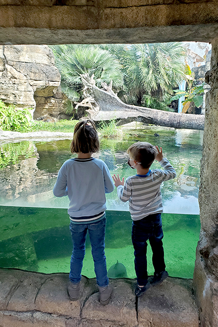 kids standing at zoo exhibit