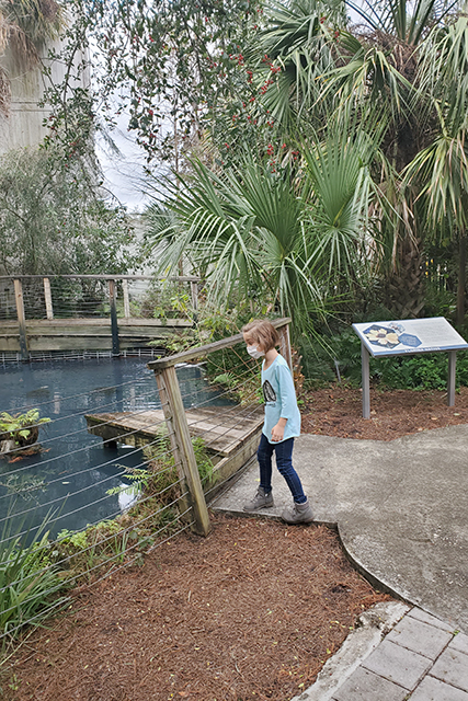 Small girl standing at fence looking into pond to see koi fish