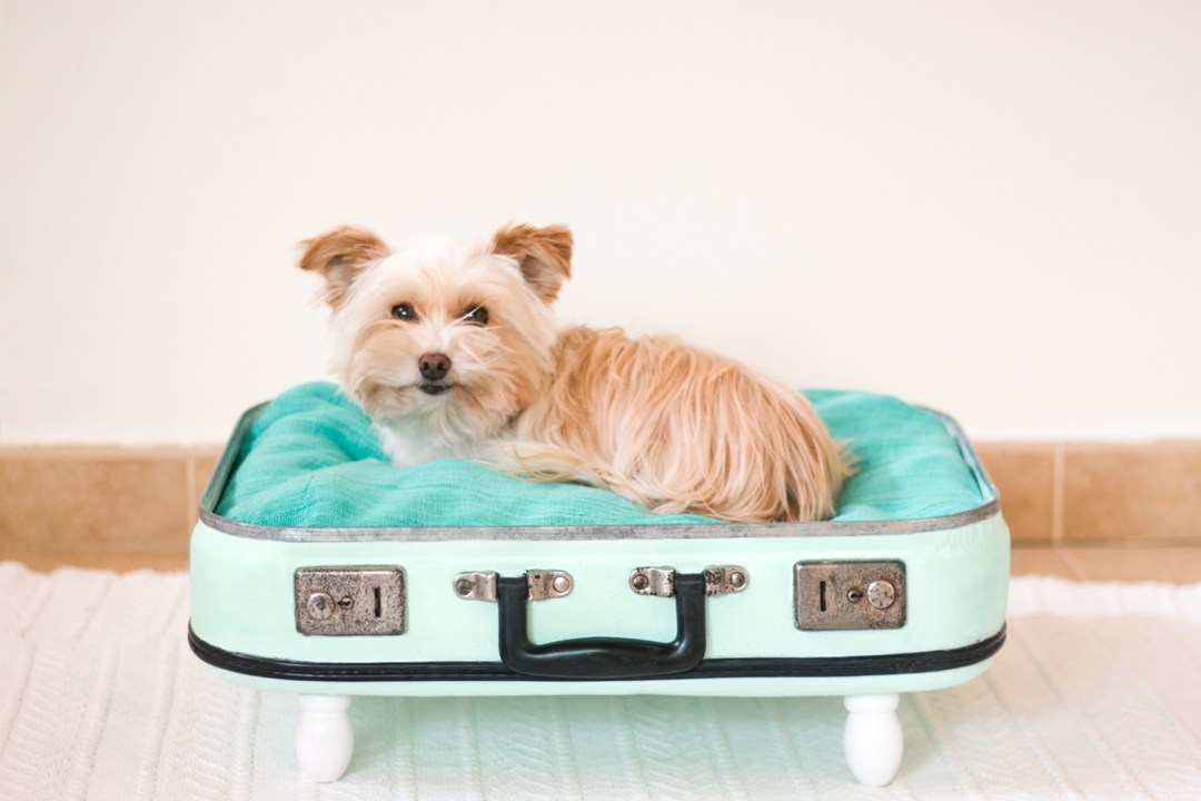 Noa en su maletin cama nuevo