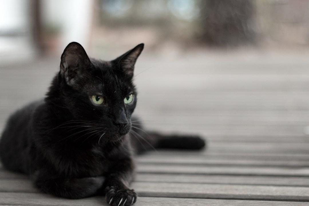 Salem a gusto