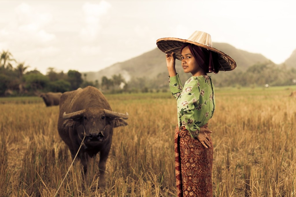 sumatra indonesia paddy field