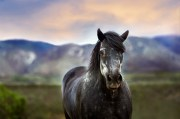 The PEMF8000E Equine Device Stimulates Health in Your Horse