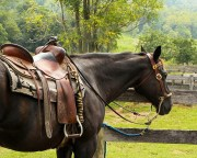 The Best PEMF Device for Horse Therapy