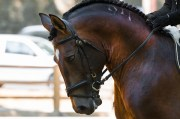 The PEMF8000 Equine Device Is Fast And Effective