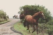 Best Equine PEMF Technology Offered by I Am Cured