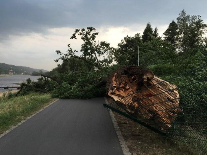 Im Juni 2017 ging nichts mehr auf dem Elberadweg bei Blasewitz