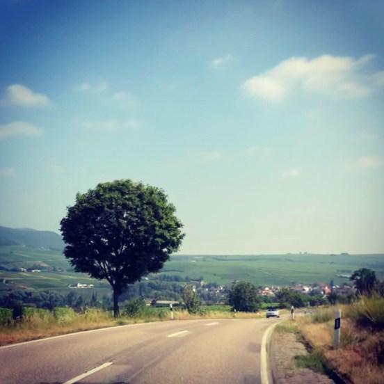Rennrad-Tour zur Kalmit und durch den Pfälzer Wald - iamcycling
