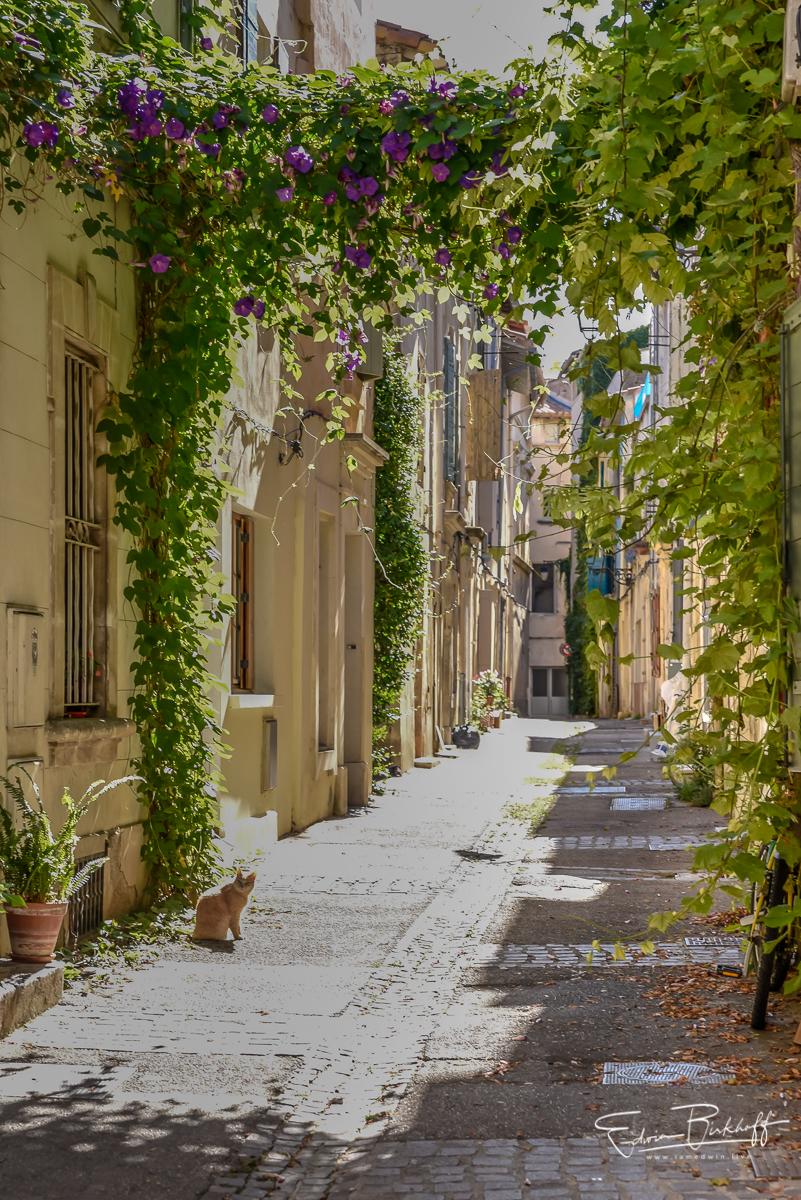 20170701_Provence_3351