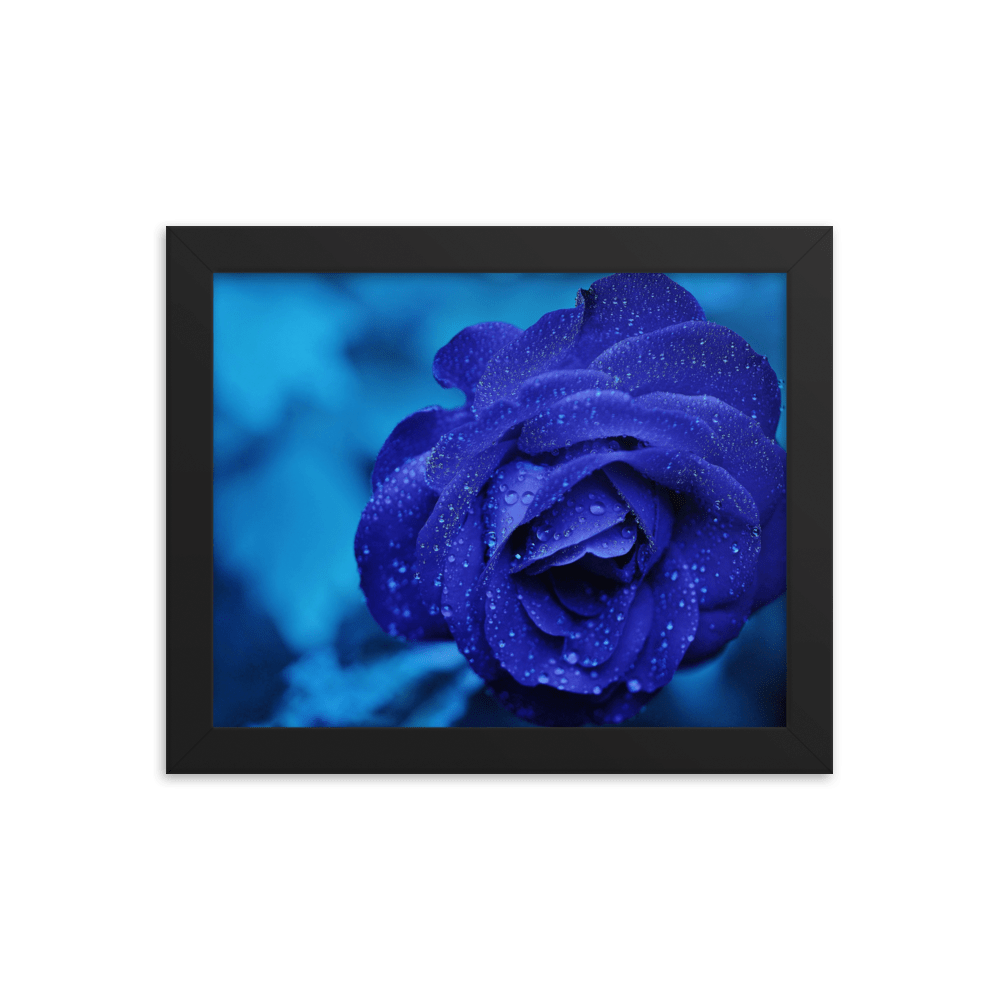 Blue Rose Framed Wall Art Print