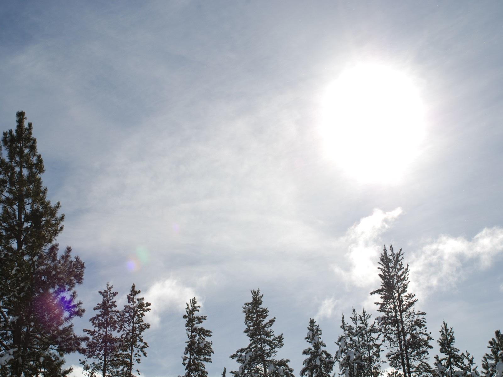 Radiant Sunlight Over Trees