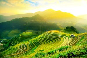 Balinese-rice-fields