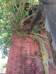 An overgrown brickwall
