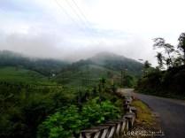 Elappara - Kattappana Road
