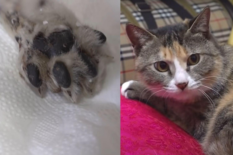 Kaki kucing putus