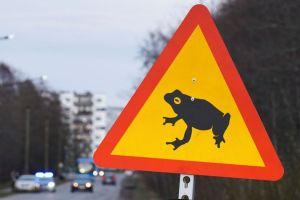 Estonia tutup jalan sebulan