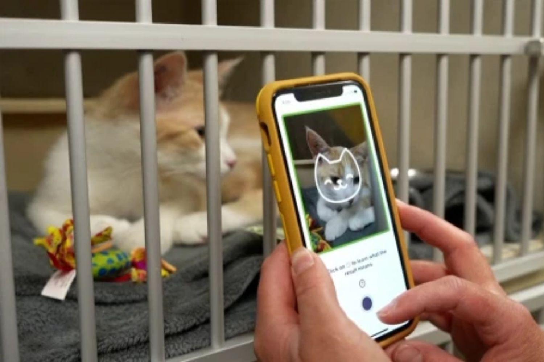 Tably, Apps Smartphone Yang Mampu Menilai Emosi Kucing Anda