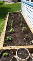 Beginning Garden