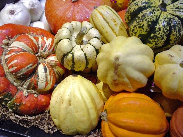 Winter Squash - wikipedia