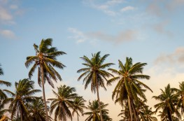 club med - palm trees - http://iamsherrelle.com