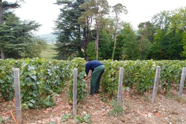 champagne tour Herve grapes - http://iamsherrelle.com