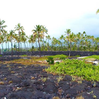 A visit to Pu`uhonua O Hōnaunau National Park (Place of Refuge) is one of the 7 Things You Must Do On The Big Island, Hawaii