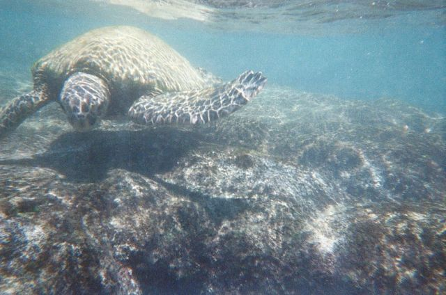 Beaches on the Big Island are so different, each one spectacular in it's own way. Here are 4 Great Beaches On The Big Island, Hawaii. Swimming with sea turtles at one beach was definitely a highlight of my trip! - Sherrelle